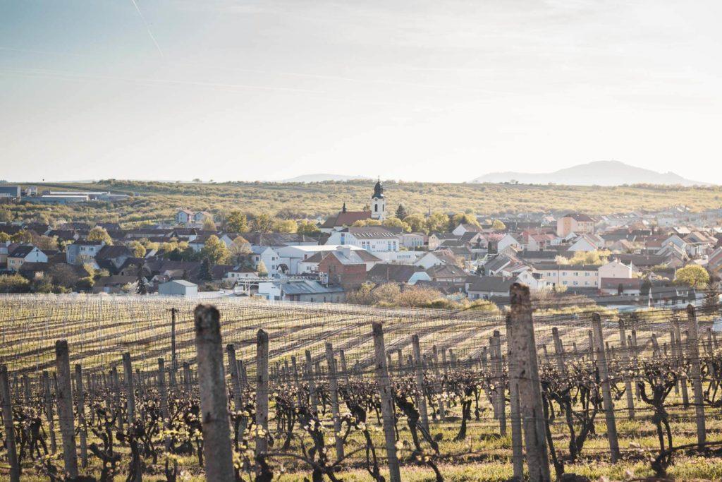 Velké Pavlovice, vinohrady, vinice, VINIUM