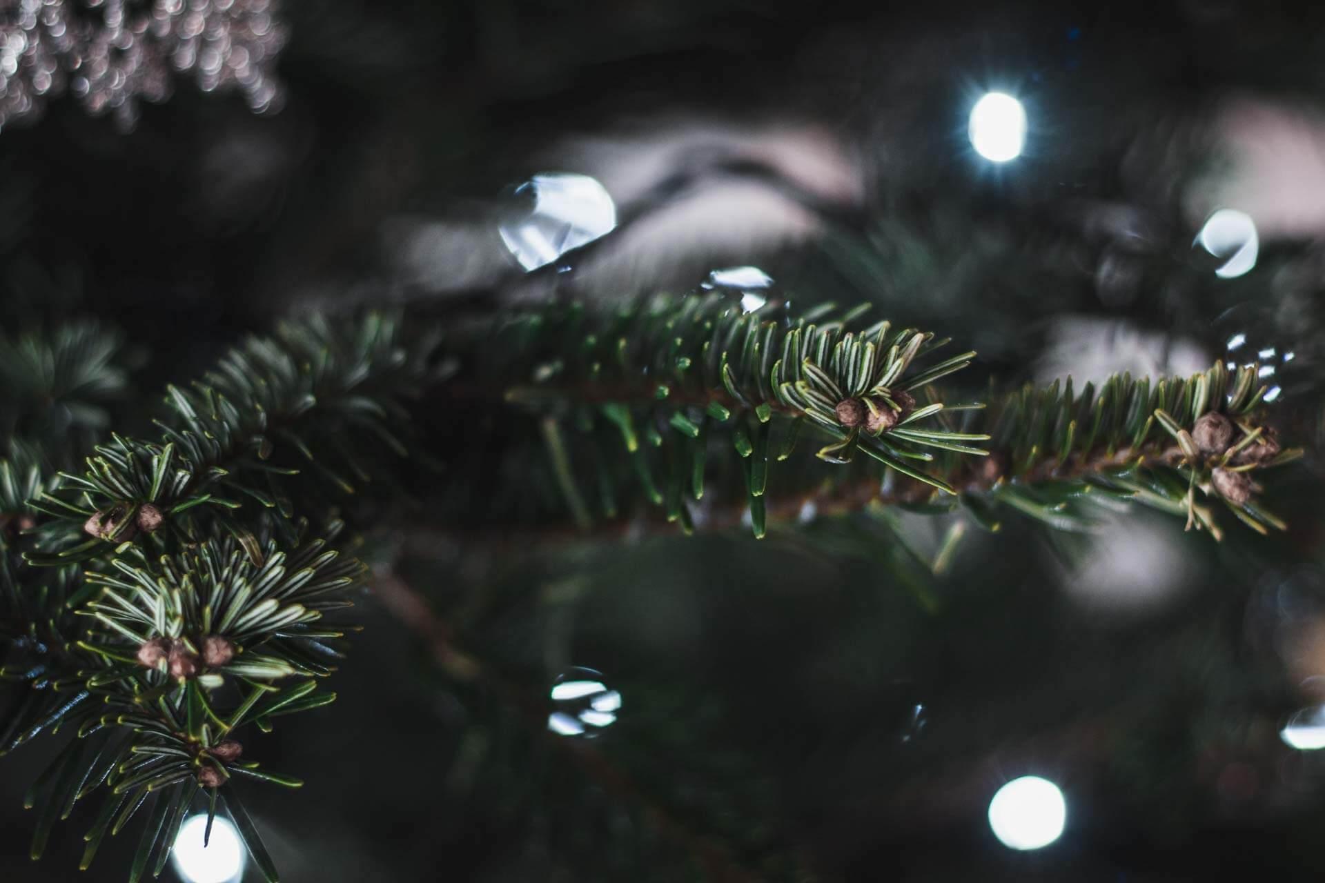 Foto ke článku 3, Vánoce, víno, štědrý den, štědrovečerní večeře